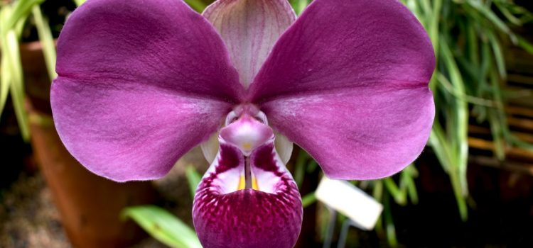 Feb 8 – Reserve your spot fo the Orchid Workshop at the Center for Subtropical Affairs!